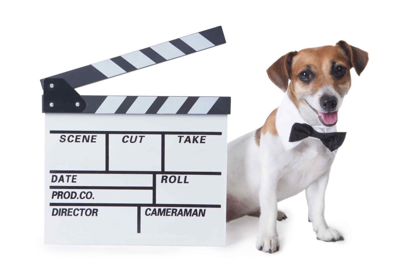 Dogs are such lovable fur babies who only want cuddles, belly rubs, and food for said bellies. Here are our favorite dogs in movies.