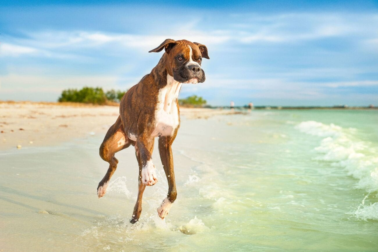 You've heard of Florida Man memes, but what about Florida Dog memes? Here are all of the crazy headlines about Florida Dogs.