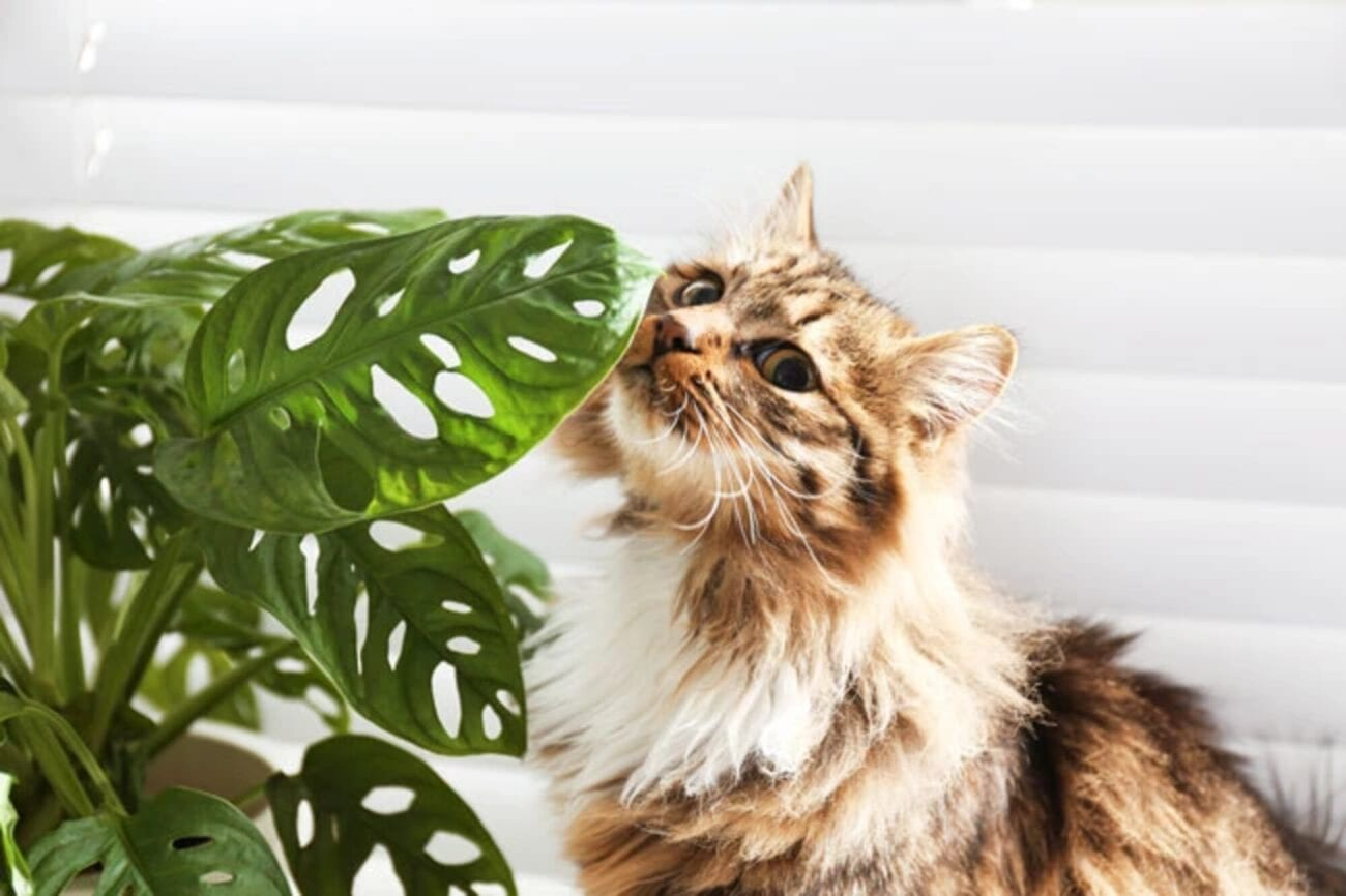 Did you know some of your house plants could be toxic to cats? Find out which ones need to be kept away from your adorable feline creatures ASAP.