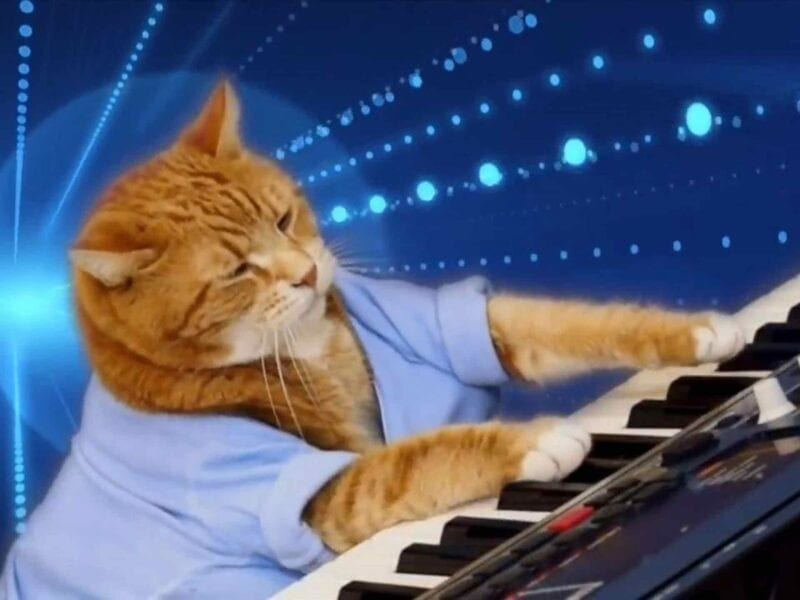 A keyboard cat, a singing cat, a skateboarding cat, oh my! Scratch your feline itch with this collection of talented kitties.